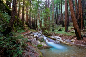 The Redwood Trail